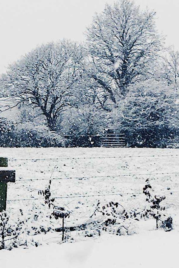 The Winter Wonderland Begins